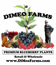 Our 100 Year Old Family Blueberry Farm And Organic Berry Plant Nurseries Grow The World S Best Plants Fashioned Way
