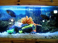 All the basics of how to select tanks, prep water & add exotic fish in the guide for saltwater aquarium for beginners in 10 easy steps! Saltwater Aquarium Beginner, Saltwater Aquarium Fish, Saltwater Tank, Planted Aquarium, Freshwater Aquarium, Saltwater Fishing, Aquariums, Best Aquarium Filter, Homemade Plant Food