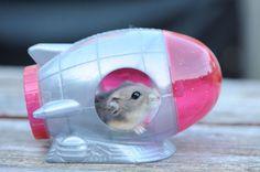 13. Un hamster qui joue avec sa peluche et un hamster astronaute dans sa fusée