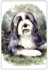 "Bearded Collie Cutting Board by Canine Designs. $29.95. Heat resistant.. Hygenic and easy to clean.. Size: 8"" x 11"". Made of tempered glass making it virtually unbreakable.. Scratch Resistant - imprinted on back. Our beautiful, dog breed cutting boards will enhance any kitchen. They make great gifts, are made of tempered glass and measure 9"" x 12"". They are heat resistant, scratch resistant, virtually unbreakable, easily cleaned and dishwasher safe."
