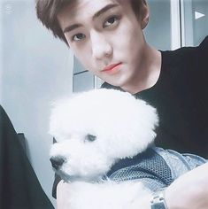 Read EXO - Sehun from the story VDM version KPOP by baekyeollifeuh (h e a v e n) with 540 reads.