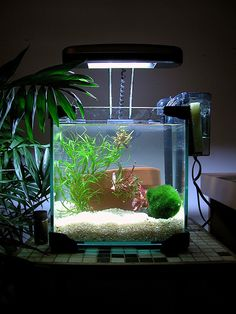 simple yet beautiful nano tank aquarium idea