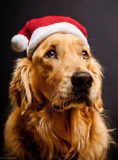 santa's+little+helper