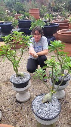 Easy Desert Landscaping Tips That Will Help You Design A Beautiful Yard Garden Terrarium, Miniature Zen Garden, Rose Seeds, Landscaping Tips, Desert Landscaping, Desert Rose Plant, Cacti And Succulents, Garden Bonsai Tree, Landscaping Plants