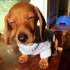 Tu cara cuando despiertas y miras directo al sol