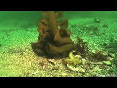 Biology and What a hide and seek game!! Octopus Camouflage