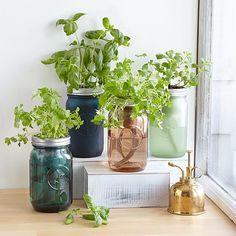 Herb Garden Kit, Herb Garden In Kitchen, Kitchen Herbs, Home Vegetable Garden, Fruit Garden, Spice Garden, Herbs Garden, Hydroponic Grow Kits, Hydroponic Farming