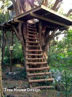 treehouse kids treehouse interior cozy treehouse masters treehouse diy treehouse design architecture treehouse ideas for teens treehouse ideas awesome treehouse ideas diy treehouse ideas interior