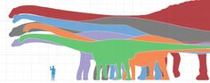 Biggest animal ever to have lived? Bruhathkayosaurus may be the biggest sauropod known from remains that still exist (may be; by now you should know how much uncertainty that covers). 220 tons!!!! (Sauroposeidon in blue; Seismosaurus in orange; Argentinosaurus in purple and Diplodocus in green. Bruhathkayosaurus was larger than all of them). Blue whales weigh in at 200 tons.