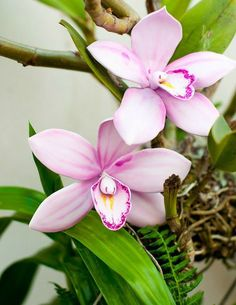 Лепим орхидею. Мастер-класс | Домохозяйка