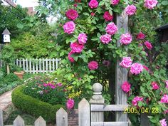 A gorgeous potager - picket fence, boxwood hedge and roses