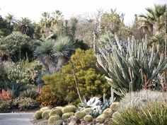 Huntington Garden --  Desert Garden