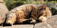 Cat - Cats Wallpaper ID 1610872 - Desktop Nexus Animals Old Cats, Cat Wallpaper, Cat Health, Pet Care, Sweet Dreams, Funny Cats, Beautiful Pictures, Pets, Animals