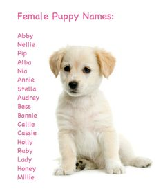 girl puppy name: