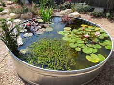 Stock Tank Pond Update Metal Tank Garden Pond (Excellent how-to via the link. Don't forget to make the pond safe re children and other small creatures AND to prevent mosquitoes. Patio Pond, Pond Landscaping, Ponds Backyard, Garden Ponds, Garden Bar, Outdoor Fish Ponds, Backyard Waterfalls, Koi Ponds, Tropical Landscaping