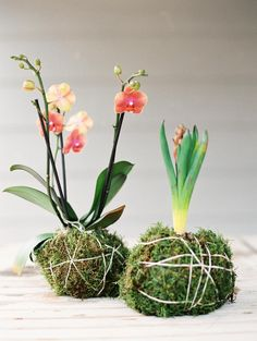 La Fête's Allison Baddley shows us how to make kokedama, a miniature moss garden, to rest on your table or suspend from the ceiling. Art Floral Japonais, String Garden, Indoor Plants, Indoor Gardening, Hanging Plants, Indoor Herbs, Air Plants, Potted Plants, Gardens