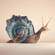 #snail #cinema #c4d #cinema4d #octane #render #octanerender #photoshop #daily…