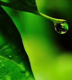 """A Drop of Earth"" ~ Photography by Suresh Menon on 500px."