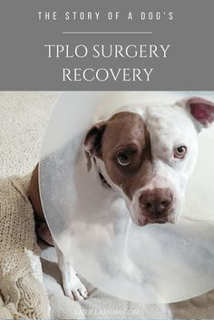 A recap of my dog's TPLO surgery day and the following eight weeks of rehabilitation.