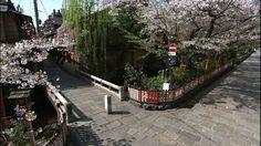 京都、祇園の桜並木と石畳を少し高い所から見下ろしたフィックスショット。ピンク色の桜の花が、きれいに咲きそろっている。小さな橋を渡った細い路地沿いには、古い街並みが続いている。2003年春撮影。