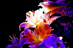 Incredible flower photography