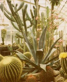 I fantasize about having a reading greenhouse full of cacti in my earthship or treehouse dream home