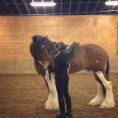 This is some crazy #equestrianskills by @stall.nova filmed by @lillentheshire 🦄 hahah who else totally thought this was real because I did?!?😂😂😂 The video is actually just reversed! . . 🐎 Follow us @equestrianbootsandbridles for more #horsesofinstagram & #dailyhorses
