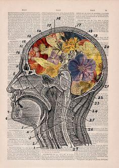 PRRINT ilustraciones anatomia flores 6