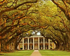 Oak Alley Plantation, Vacherie, LA.  Oak Alley Plantation (L'Allée des chênes) was named for a remarkable quarter-mile double row of 28 live oaks, planted in the early 1700's by a French settler. The trees extended from the main house down to the shore of the Mississippi River.