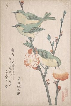 "Japanese ""White-eyes"" Perching on a Branch of Peach Tree  Kubo Shunman  (Japanese, 1757–1820)  Date: 19th century Culture: Japan Medium: Part of an album of woodblock prints (surimono); ink and color on paper"