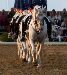 It's All About the Lipizzans: An Interview With Conrad Schumacher | Horses, Dressage & More