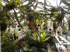 My greenhouse would definitely be crammed full of plants.