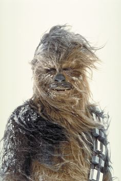 Chewbacca  / from star wars movie this looks like my chow dog in the winter LOL