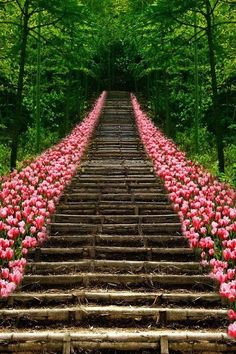 I want a flower-lined walkway to a mysterious destination. <3