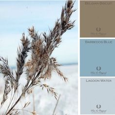 Blog | Pure & Original Blue Palette, Colour Pallette, Colour Schemes, Color Patterns, Wall Colors, Paint Colors, Pallet Painting, Color Balance, French Blue