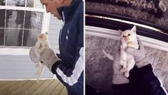 White Wolf : Early Christmas Miracle: Family Finds A Frozen Kitten, Then Brings Him Back To Life