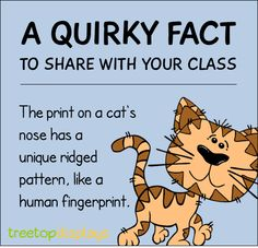 Posted to FB A quirky fact about cats to share with your classroom - from Treetop Displays. Visit our TpT store for printable resources by clicking on the provided links. Designed by teachers for Pre-Kindergarten to Grade. Fun Facts For Kids, Fun Facts About Animals, Jokes For Kids, Animal Facts For Kids, Classroom Fun, Classroom Activities, Learning Activities, Future Classroom, Cat Facts