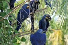 Pantanal Guide Experience Volunteer Programs, Volunteer Abroad, Giant River Otter, Giant Anteater, Visit Brazil, Sustainable Tourism, Paradise On Earth, African Safari, Bird Watching