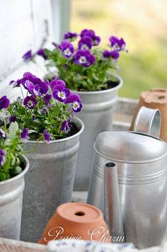 Prairie Charm Pansies-Treasure Hunt Thursday- From My Front Porch To Yours