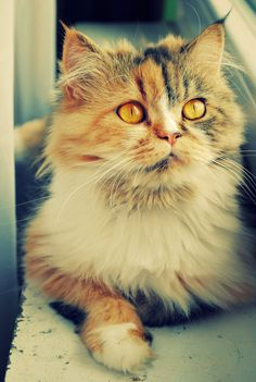 I want this kitty. Crazy cat lady for life.