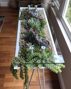 Gorgeous Succulent Plants Ideas For Indoor And Outdoor Full Of Aesthetics - - Beautiful Succulents indoor ideas, succulents outdoor decor , succulent diy garden ideas, succulent - Succulent Outdoor, Succulent Gardening, Vertical Succulent Gardens, House Plants Decor, Plant Decor, Cacti And Succulents, Planting Succulents, Suculentas Interior, Jardin Decor