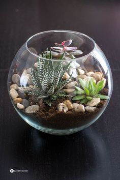DIY 5 ways to style succulents and cacti- DIY 5 Arten um Sukkulenten und Kakteen zu stylen Decorate succulents in fishbowl vase - Succulent Gardening, Cacti And Succulents, Planting Succulents, Cactus Plants, Cactus Flower, Vases Decor, Plant Decor, Cactus Terrarium, Terraria