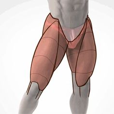 Exceptional Drawing The Human Figure Ideas. Staggering Drawing The Human Figure Ideas. Leg Anatomy, Anatomy Poses, Muscle Anatomy, Zbrush Anatomy, Anatomy Organs, Heart Anatomy, Tutorial Draw, Anatomy Tutorial, Human Reference