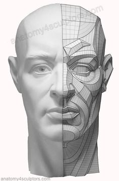 Drawing Anatomy Reference The right side is a fairly complex topographical description of the structures. The breakdown describes plane directional changes as well as light effects. Facial Anatomy, Head Anatomy, Human Anatomy Drawing, Anatomy Poses, Anatomy Study, Anatomy Art, Anatomy Of The Face, Human Reference, Anatomy Reference