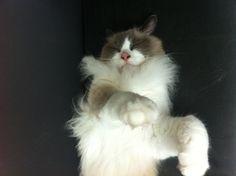 My little lovely cat.