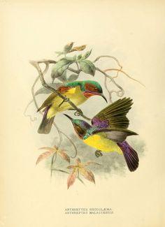 sunbirds                                                                                                                                                                                 Más