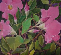 Mandevilla (available at the Village Galleries, Lahaina Maui)