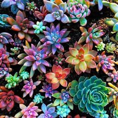 Pretty succulents from 🌱🌸 . I want to thank everyone who bought something from my last shop update, you guys rock! Colorful Succulents, Planting Succulents, Planting Flowers, Echeveria, Cactus Y Suculentas, Arte Floral, Houseplants, Cactus Plants, Indoor Plants