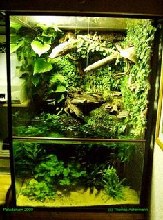 Flora and Fauna Mania-My Life Passion: Types Of Aquascaping [I'd like the waterline to be less defined, but even though there is a lot of plants growing in the tank it doesn't look crowded]