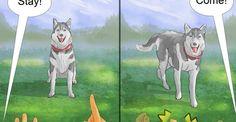 6 Best Ways to Train Your Siberian Huskyhttps://www.mostviralfeed.com/best-ways-train-siberian-husky/